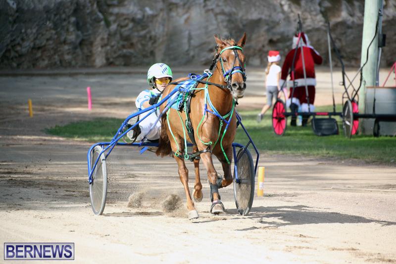 Horses-Bermuda-Dec-20-2017-19