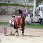 Horses Bermuda Dec 20 2017 (3)