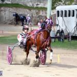 Horses Bermuda Dec 20 2017 (4)