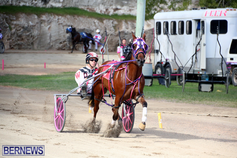 Horses-Bermuda-Dec-20-2017-4