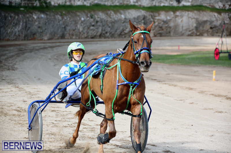 Horses-Bermuda-Dec-20-2017-5