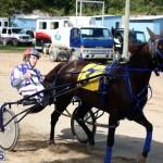 Horses Bermuda Dec 20 2017 (6)