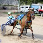 Horses Bermuda Dec 20 2017 (8)