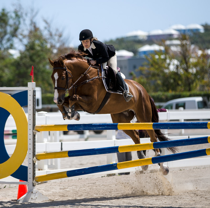 Equestrian Bermuda Jan 2 2018 (1)