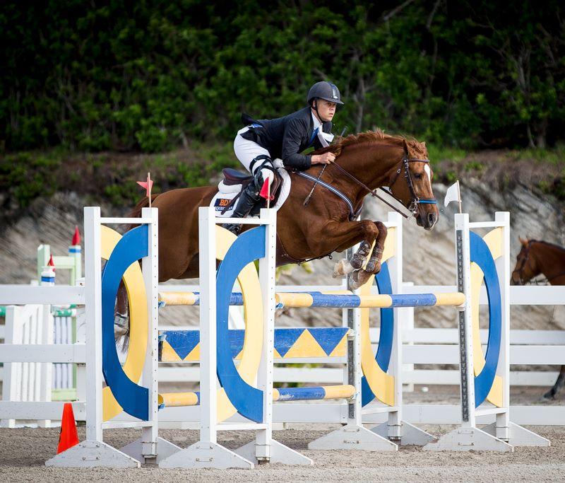 Equestrian Bermuda Jan 2 2018 (3)