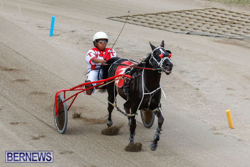 Harness-Pony-Racing-Bermuda-January-28-2018-6314