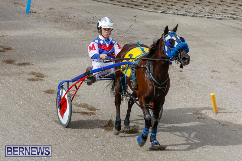 Harness-Pony-Racing-Bermuda-January-28-2018-6360