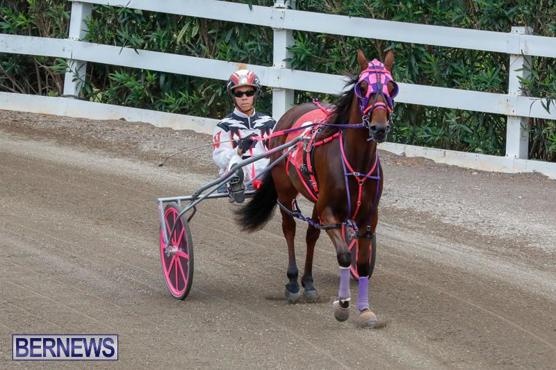 Harness-Pony-Racing-Bermuda-January-28-2018-6433