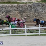 Harness Pony Racing Bermuda, January 28 2018-6484