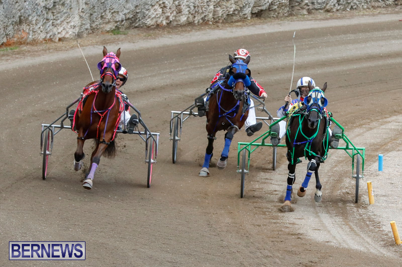 Harness-Pony-Racing-Bermuda-January-28-2018-6494