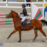 Bermuda Equestrian Federation Stardust Jumper Series, February 3 2018-6827