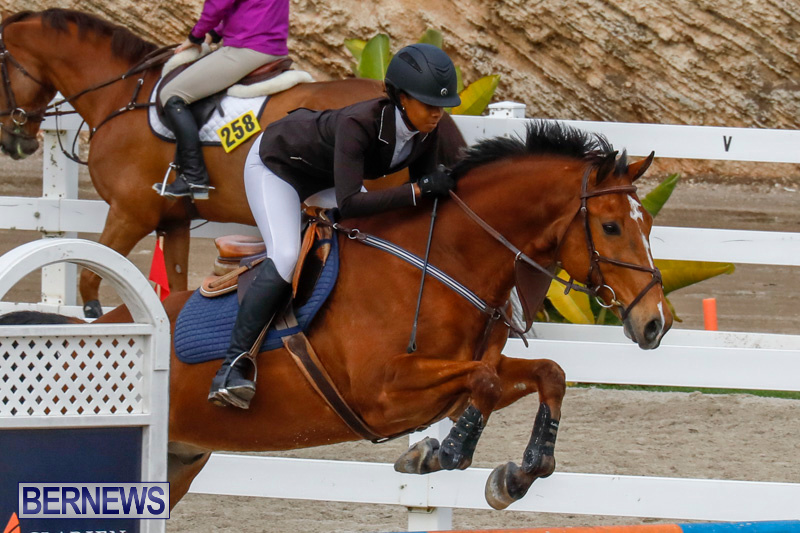 Bermuda-Equestrian-Federation-Stardust-Jumper-Series-February-3-2018-6833