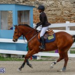 Bermuda Equestrian Federation Stardust Jumper Series, February 3 2018-6861