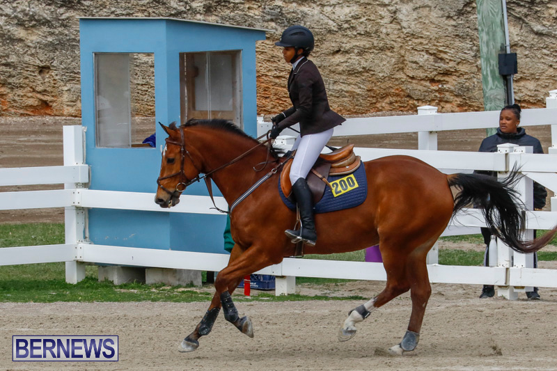 Bermuda-Equestrian-Federation-Stardust-Jumper-Series-February-3-2018-6861