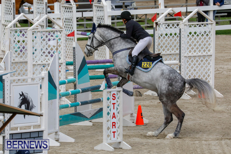 Bermuda-Equestrian-Federation-Stardust-Jumper-Series-February-3-2018-6884