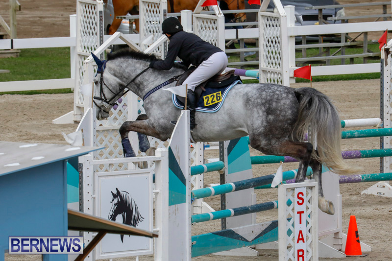 Bermuda-Equestrian-Federation-Stardust-Jumper-Series-February-3-2018-6886