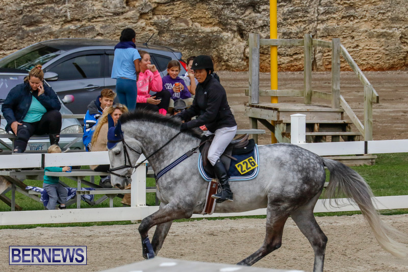 Bermuda-Equestrian-Federation-Stardust-Jumper-Series-February-3-2018-6902