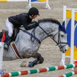 Bermuda Equestrian Federation Stardust Jumper Series, February 3 2018-6906