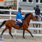 Bermuda Equestrian Federation Stardust Jumper Series, February 3 2018-6912