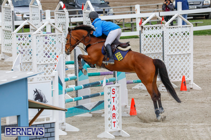 Bermuda-Equestrian-Federation-Stardust-Jumper-Series-February-3-2018-6939