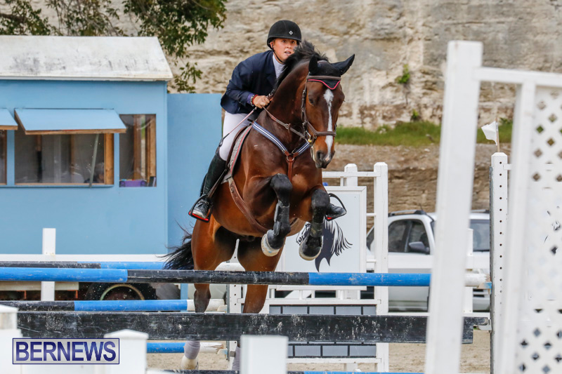 Bermuda-Equestrian-Federation-Stardust-Jumper-Series-February-3-2018-6997