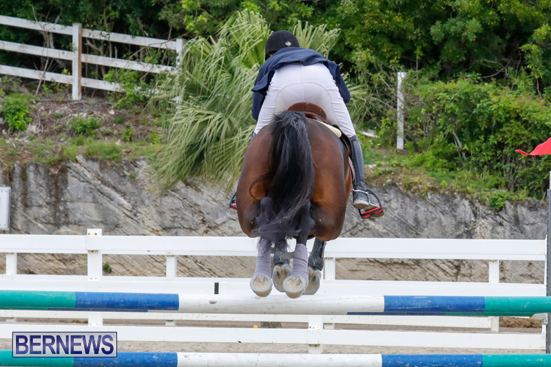 Bermuda-Equestrian-Federation-Stardust-Jumper-Series-February-3-2018-7266