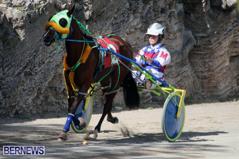 Harness-Pony-Racing-Bermuda-Feb-21-2018-2-2