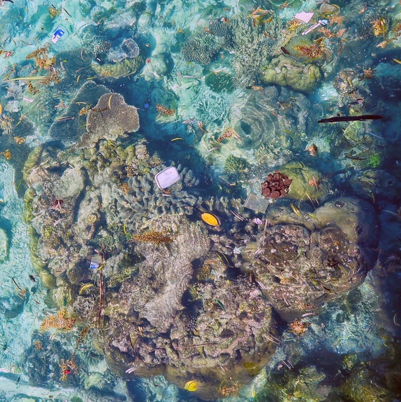 Column: Plastic Threats To World's Coral Reefs