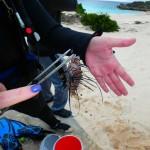 Winter Lionfish Derby Bermuda Feb 2018 (21)