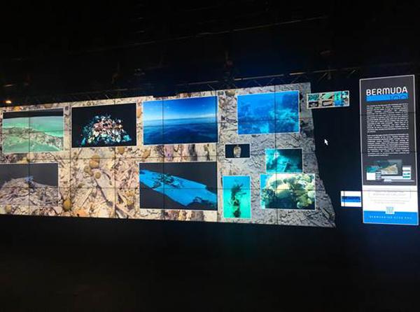 Bermuda underwater scenes March 2018
