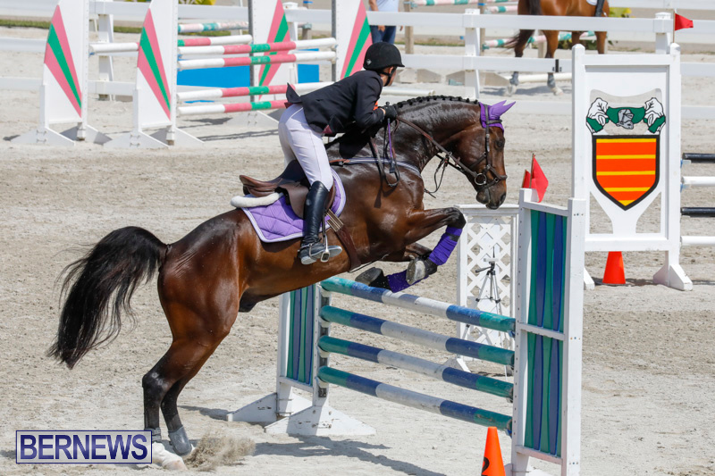 FEI-World-Jumping-Challenge-Bermuda-March-31-2018-8027
