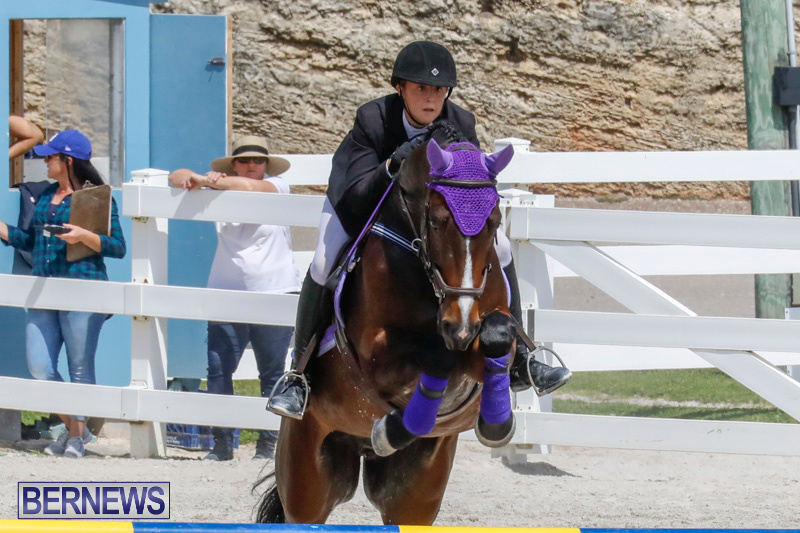 FEI-World-Jumping-Challenge-Bermuda-March-31-2018-8036