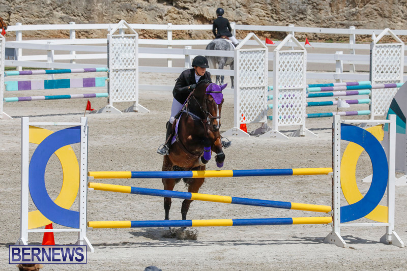 FEI-World-Jumping-Challenge-Bermuda-March-31-2018-8040