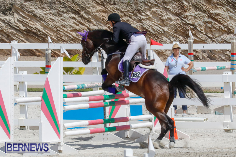 FEI-World-Jumping-Challenge-Bermuda-March-31-2018-8045