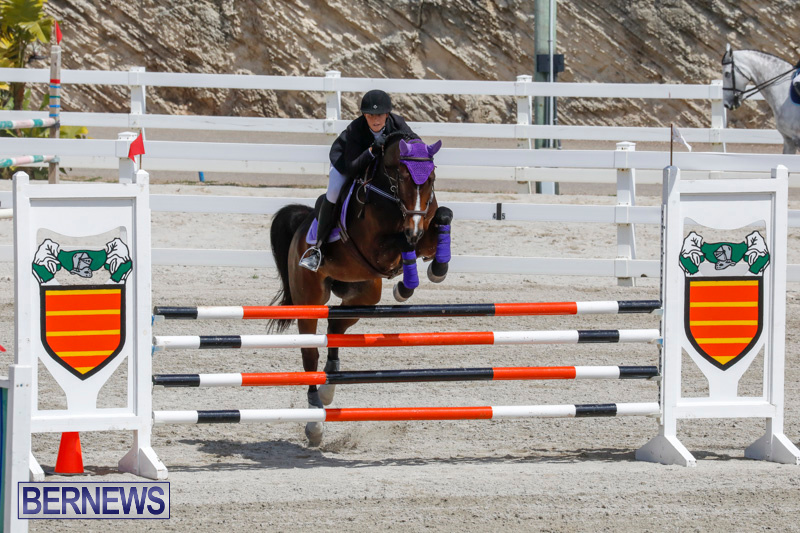 FEI-World-Jumping-Challenge-Bermuda-March-31-2018-8057