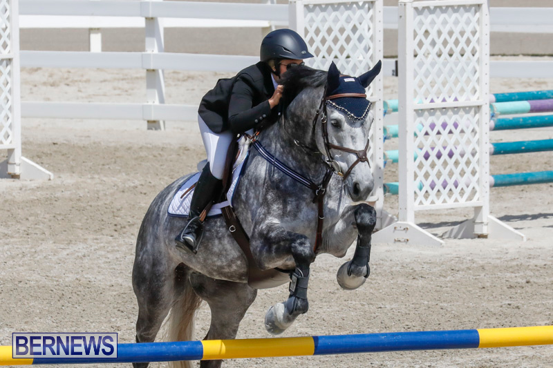FEI-World-Jumping-Challenge-Bermuda-March-31-2018-8061