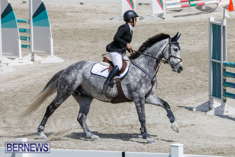 FEI-World-Jumping-Challenge-Bermuda-March-31-2018-8066