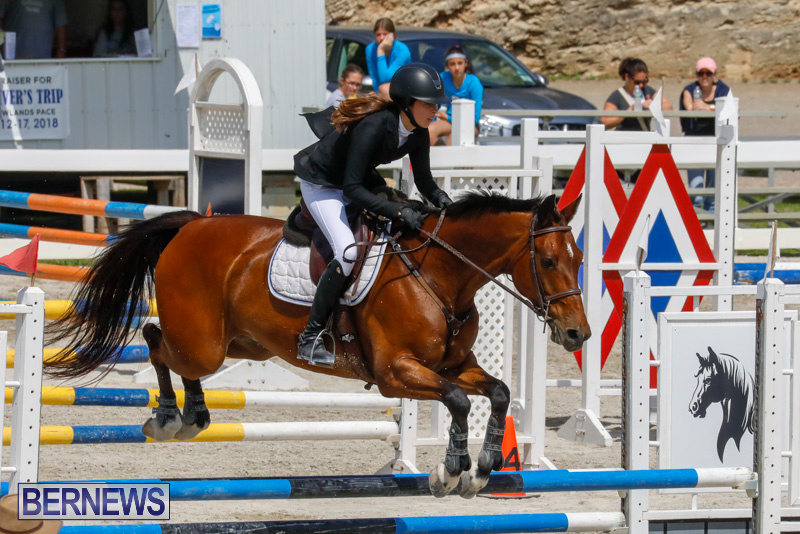 FEI-World-Jumping-Challenge-Bermuda-March-31-2018-8111