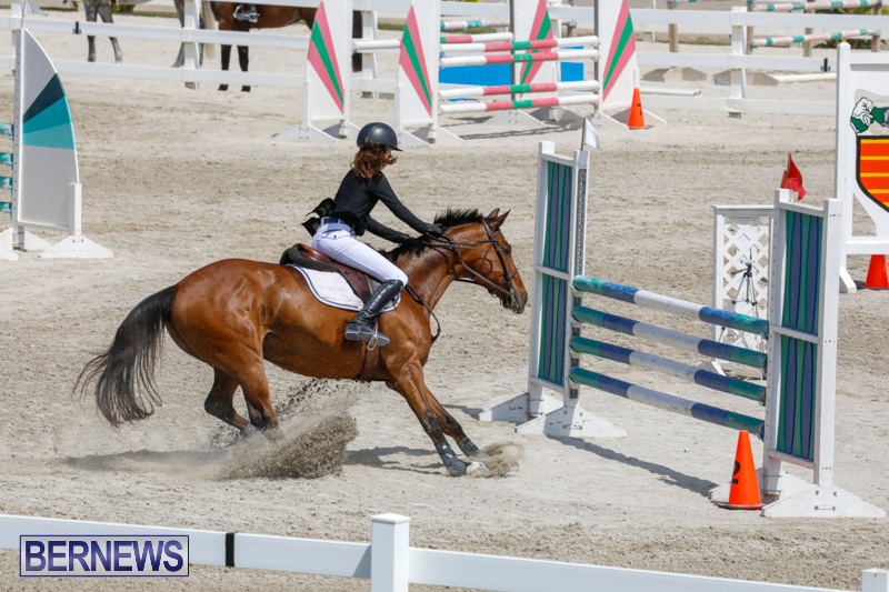 FEI-World-Jumping-Challenge-Bermuda-March-31-2018-8117