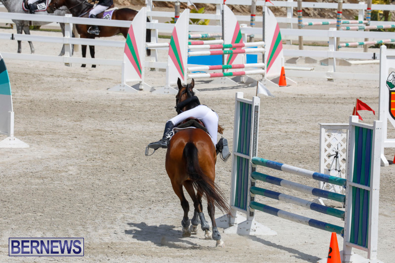 FEI-World-Jumping-Challenge-Bermuda-March-31-2018-8121