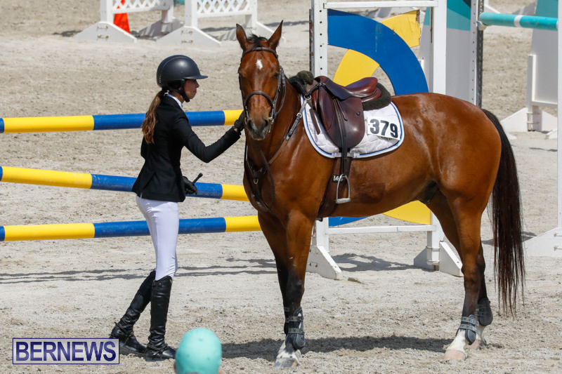 FEI-World-Jumping-Challenge-Bermuda-March-31-2018-8131