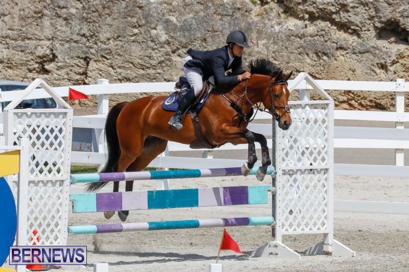 FEI-World-Jumping-Challenge-Bermuda-March-31-2018-8184