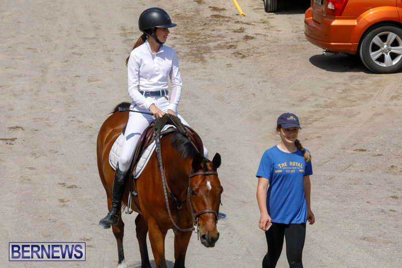 FEI-World-Jumping-Challenge-Bermuda-March-31-2018-8197