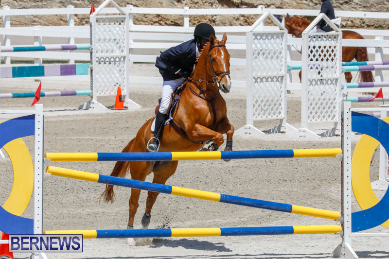 FEI-World-Jumping-Challenge-Bermuda-March-31-2018-8222