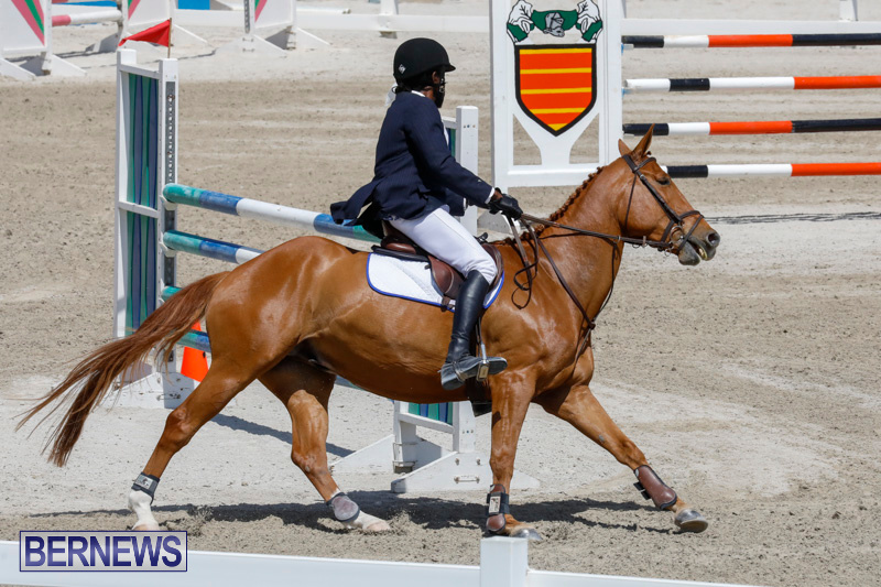 FEI-World-Jumping-Challenge-Bermuda-March-31-2018-8226