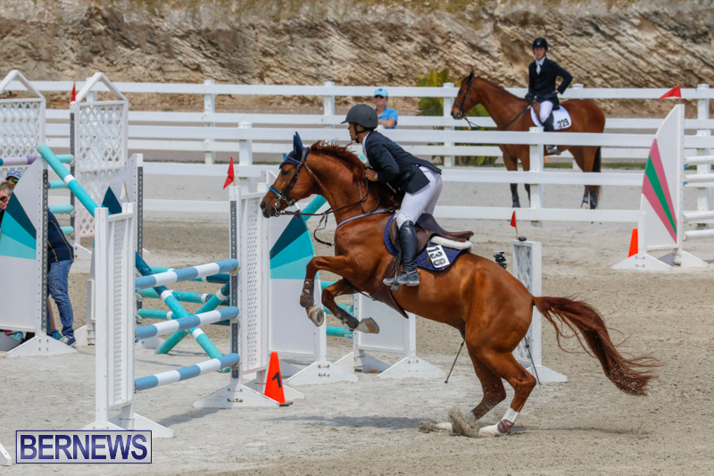 FEI-World-Jumping-Challenge-Bermuda-March-31-2018-8322