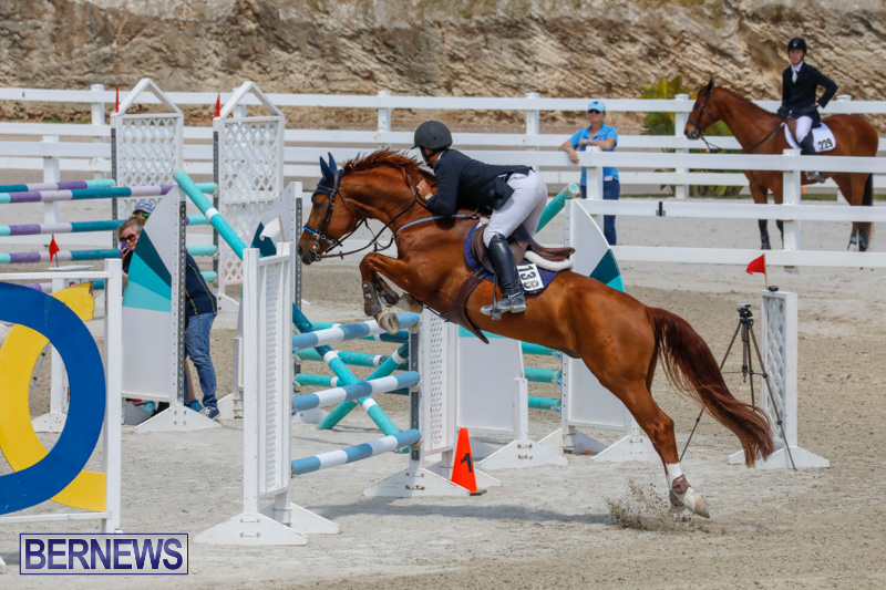 FEI-World-Jumping-Challenge-Bermuda-March-31-2018-8323