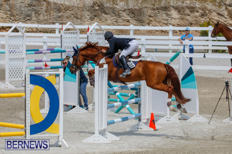 FEI-World-Jumping-Challenge-Bermuda-March-31-2018-8324