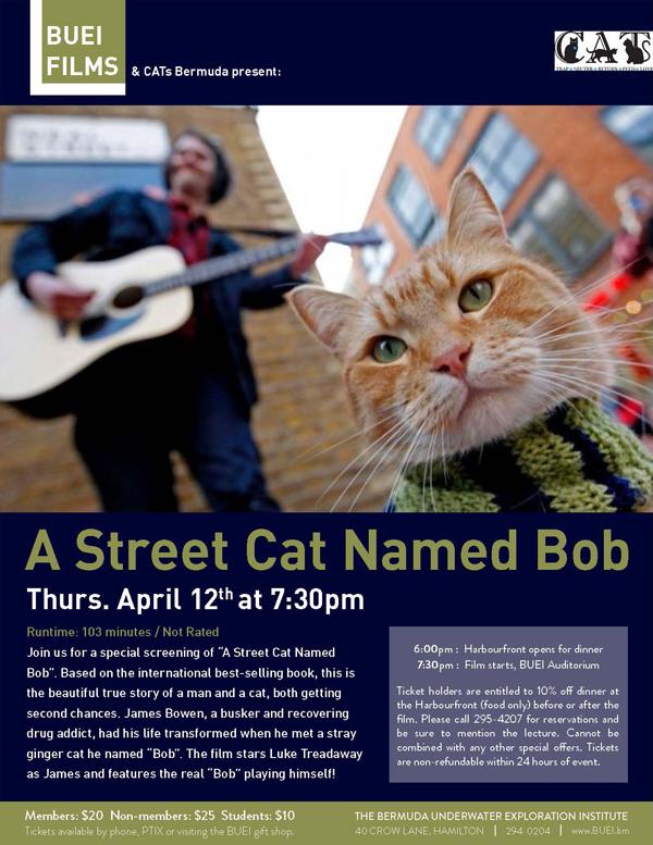 Street Cat Bob Bermuda March 2018