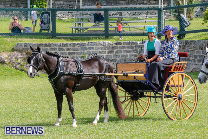 Ag-Show-at-Botanical-Gardens-Bermuda-April-21-2018-2366